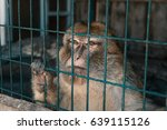 Cute Monkey Sitting In Cage On...