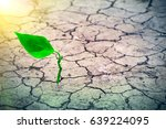 small tree breaks through the... | Shutterstock . vector #639224095