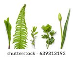 green plants isolated on white... | Shutterstock . vector #639313192