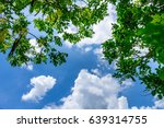 the silhouette of tree stands... | Shutterstock . vector #639314755