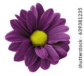 dark purple gerbera flower. ... | Shutterstock . vector #639381235