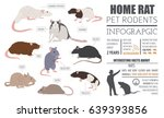 rat breeds infographic template ... | Shutterstock .eps vector #639393856