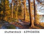 warm evening sunlight in forest   Shutterstock . vector #639436006