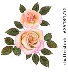 watercolor roses isolated on... | Shutterstock . vector #639484792
