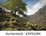 feigenbaum im sp    tsommer ... | Shutterstock . vector #63956284