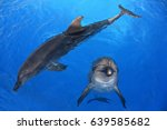 dolphin playing with hula hula... | Shutterstock . vector #639585682