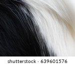 Close Up White And Black Borde...
