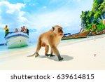 monkey beach  phi phi islands ... | Shutterstock . vector #639614815