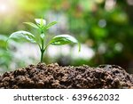 plant growth up to environment...   Shutterstock . vector #639662032