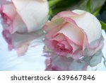 beautiful roses reflected in... | Shutterstock . vector #639667846