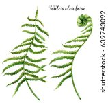 watercolor set with fern leaves.... | Shutterstock . vector #639743092