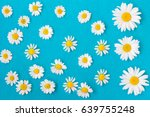 daisies on a blue background.... | Shutterstock . vector #639755248