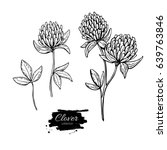 Clover Flower Vector Drawing...
