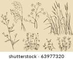 Field Flowers Grass