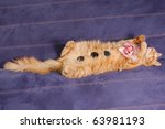 Stock photo spa kitten sleeps with flower and stones on sofa 63981193