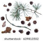 pine cones and branches... | Shutterstock . vector #639813502