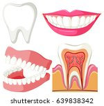 diagram showing mouth and teeth ... | Shutterstock .eps vector #639838342
