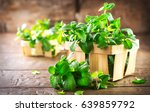 mint. bunch of fresh green... | Shutterstock . vector #639859792