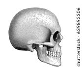 Stippled Human Skull With A...