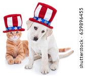 Stock photo patriotic happy american pet kitten cat and puppy dog animals wearing red white and blue uncle sam 639896455