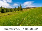 meadow with wildflowers. dandelions and daisies among green grass. spruce forest at the foot of the mountain. beautiful springtime landscape. good weather with blue sky and few clouds. - stock photo