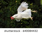 flying hen   chicken | Shutterstock . vector #640084432