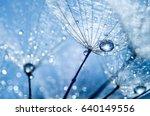 abstract dandelion flower seeds ... | Shutterstock . vector #640149556