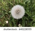 dandelion in nature   Shutterstock . vector #640228555