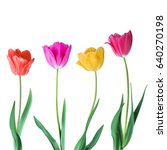 tulips. color vector tulips... | Shutterstock .eps vector #640270198