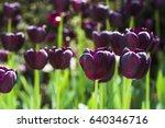 tulip. beautiful bouquet of...   Shutterstock . vector #640346716