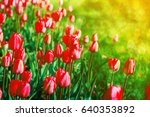 spring flowers background. red...