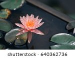 beautiful water lily  | Shutterstock . vector #640362736