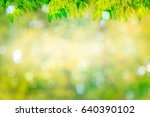 light green leaves  natural... | Shutterstock . vector #640390102
