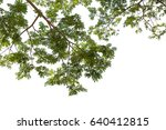 branch of tiny green leaf.... | Shutterstock . vector #640412815