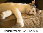white aegean cat napping   Shutterstock . vector #640420942