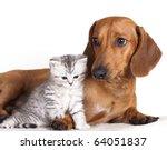 Stock photo dachshund dog and kitten 64051837