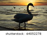Silhouette Of A White Swan At...