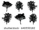 silhouette of trees isolated on ... | Shutterstock . vector #640550182