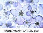 transparent spring flowers...   Shutterstock . vector #640637152