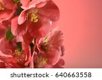 spring flowers of red color on... | Shutterstock . vector #640663558