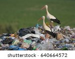 storks on pile of garbage at... | Shutterstock . vector #640664572