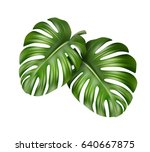 vector big green leaves of... | Shutterstock .eps vector #640667875