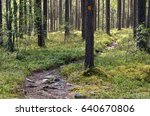 Hiking Trail With Signs In The...