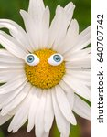 Chamomile Flower With Toy Blue...