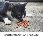 cat eating food | Shutterstock . vector #640766932