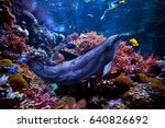 tropical fish on a coral reef.... | Shutterstock . vector #640826692