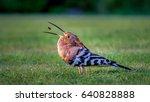 bird  | Shutterstock . vector #640828888