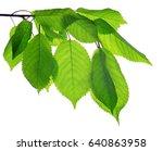 spring branch of cherry tree... | Shutterstock . vector #640863958