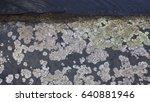 lichen    Shutterstock . vector #640881946