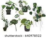 indoor plants set vector. leaf... | Shutterstock .eps vector #640978522